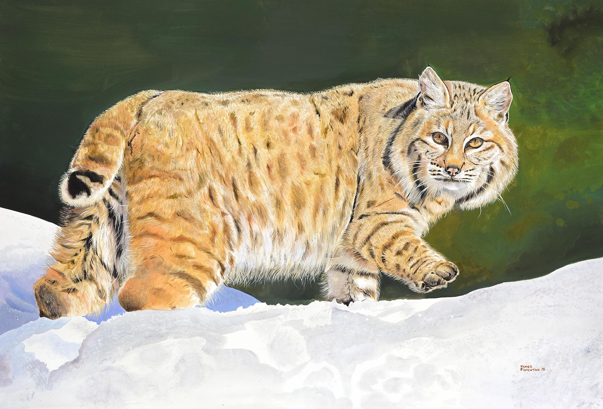 bobcat - arttodreamfor.jpg