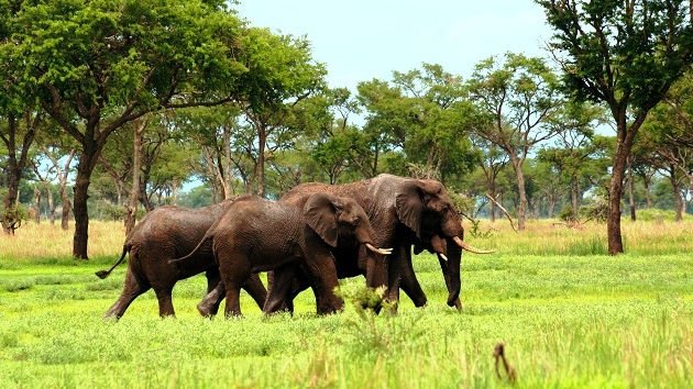 Lake Shore Lodge Tz - Lake Tanganyika - Adventure Safaris - Katavi - Elephant.jpg