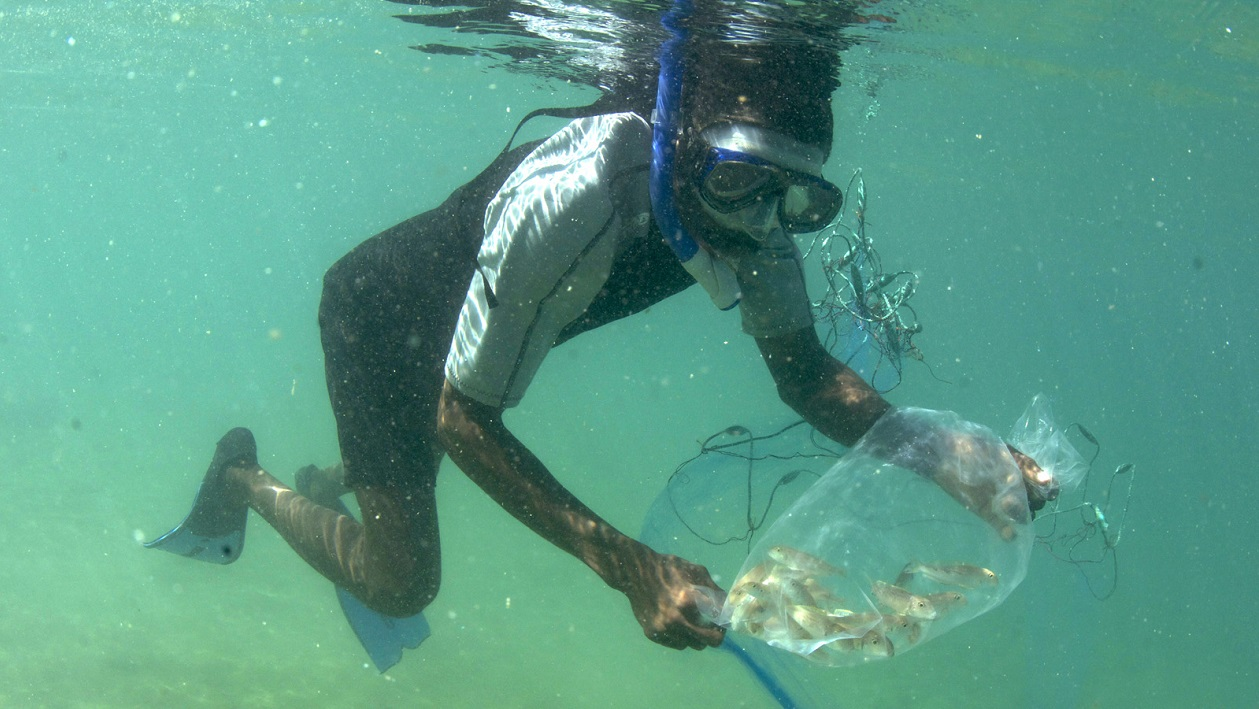Lake Shore Lodge Tz - Lake Tanganyika - Fish extractor with fish.jpg