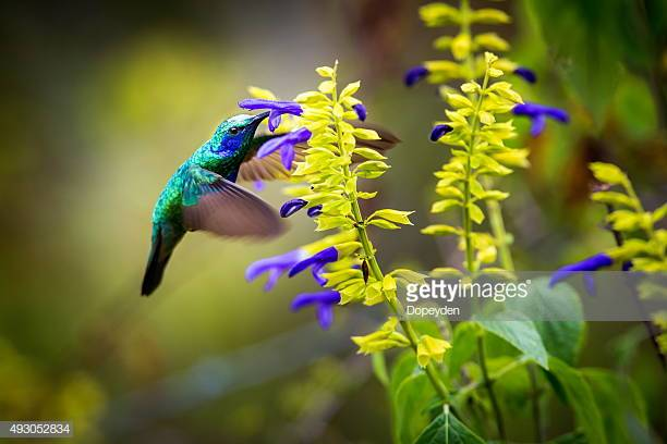 Photo by Dopeyden/iStock / Getty Images