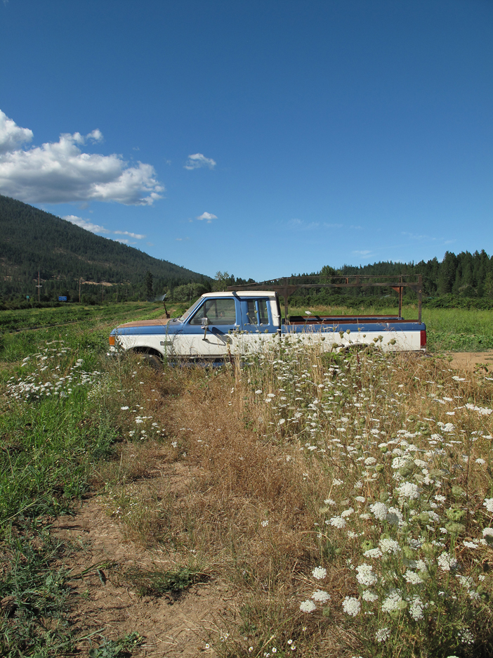 Queen Anne's lace and parked truck