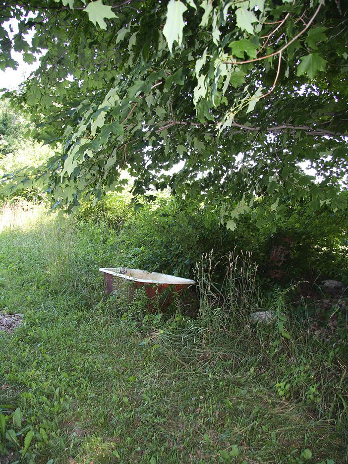 Bathtub under the maple tree