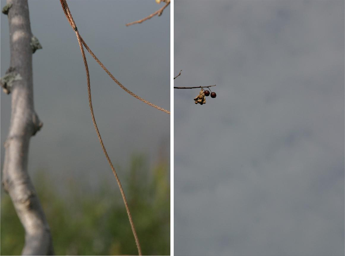 String Diptych, 2007- 33 x 44