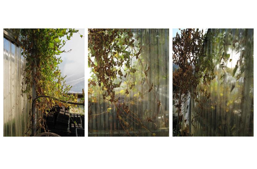 Planting Trays, triptych
