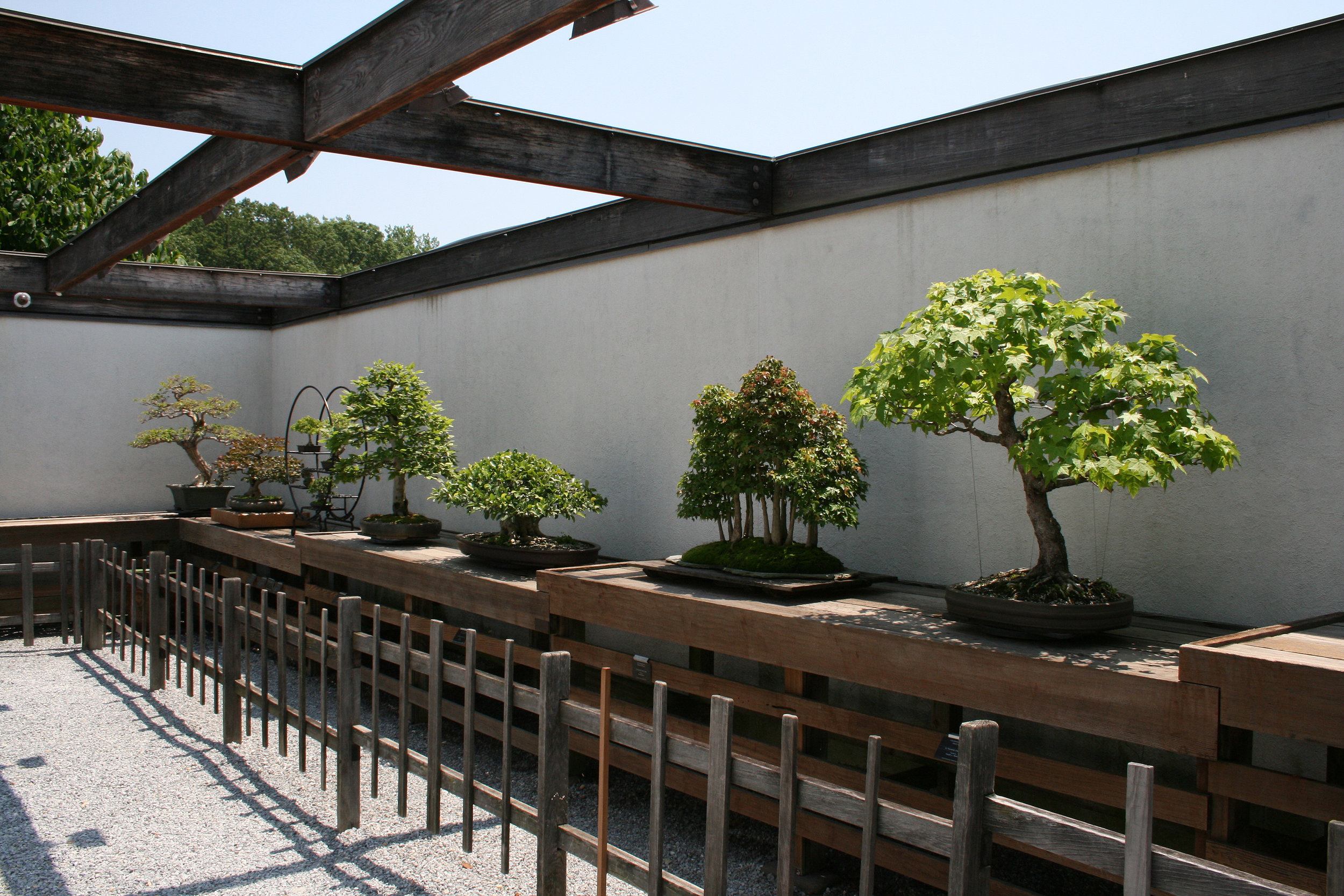 National Bonsai Foundation Bonsai Museum Washington Dc