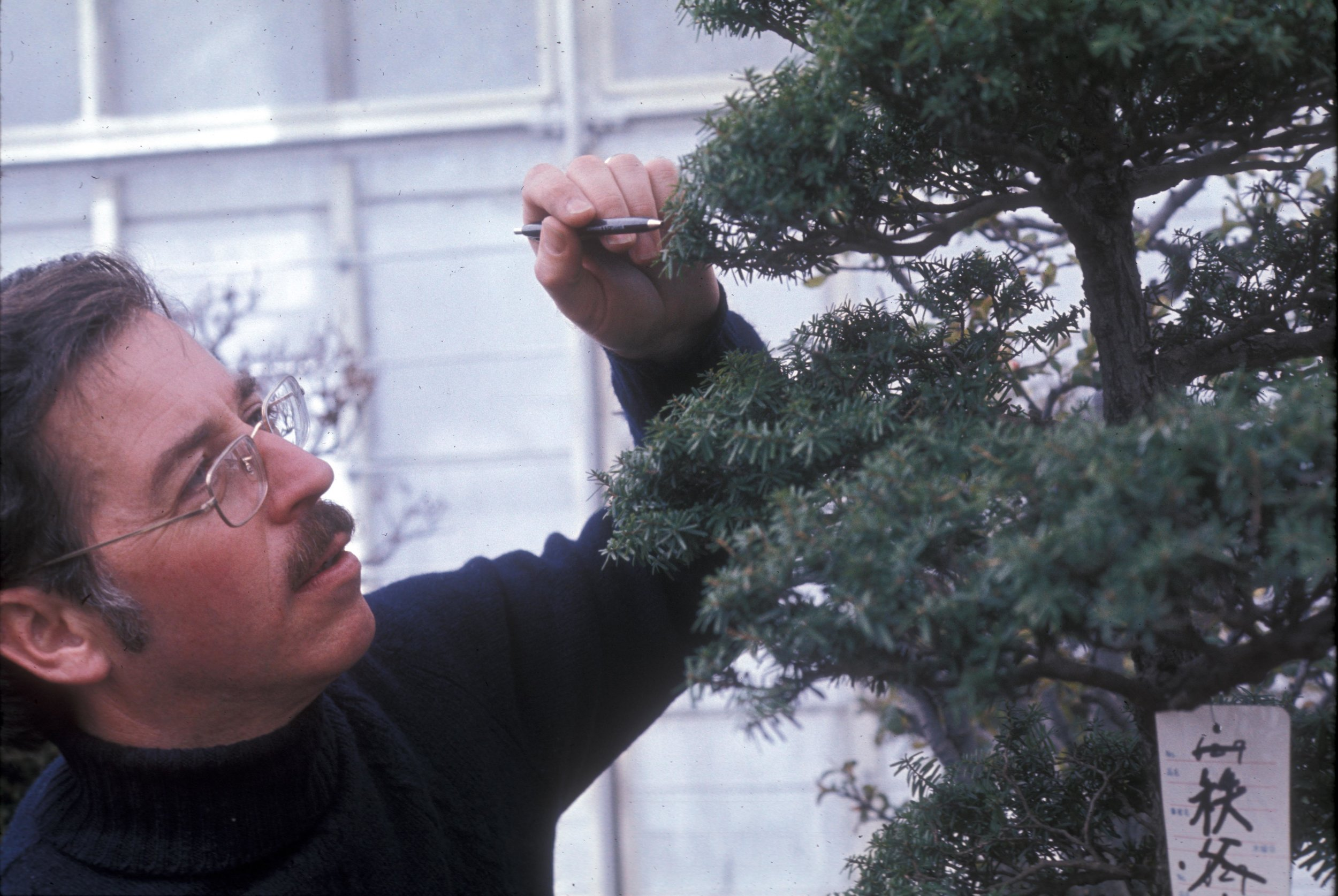 First Inspection of Japanese Bonsai