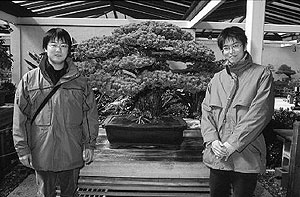 Yamaki brothers in front of bonsai tree