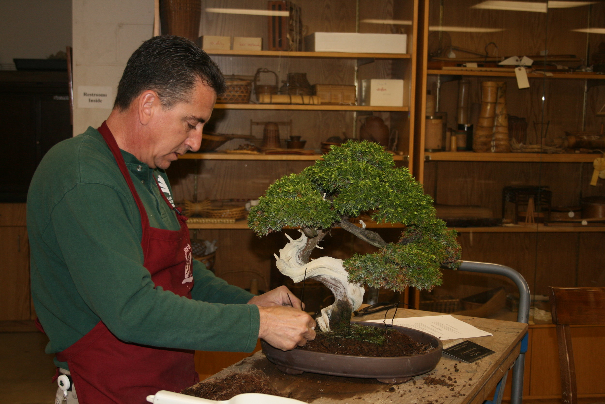 Bonsai Workshops with Masters