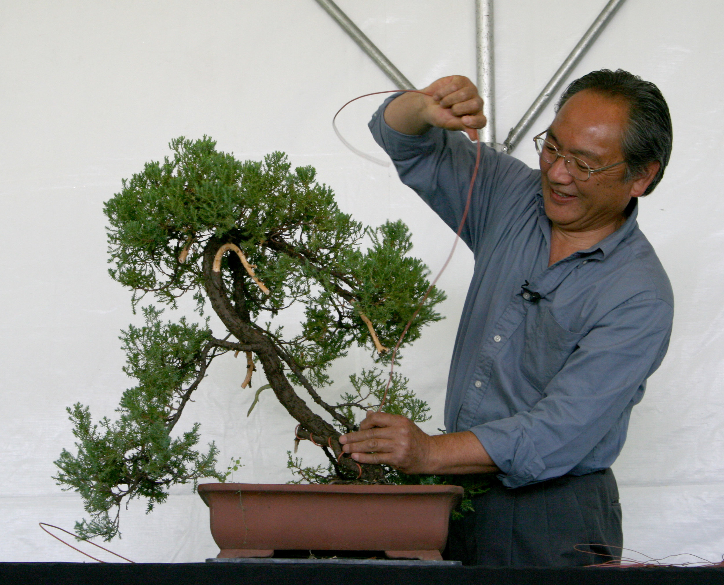 Bonsai Demonstrations