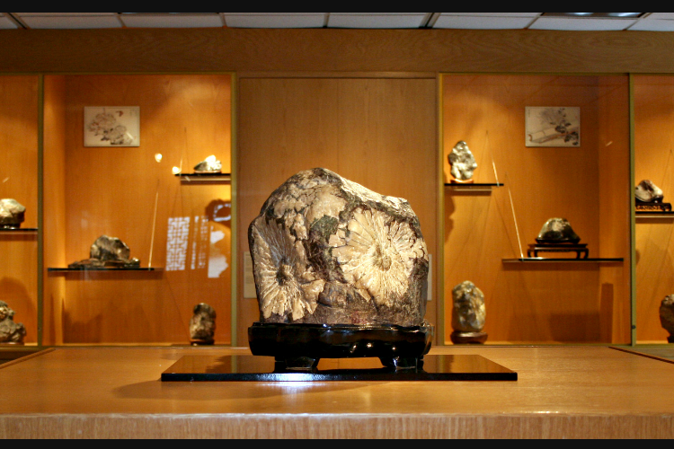 Viewing Stone Collection
