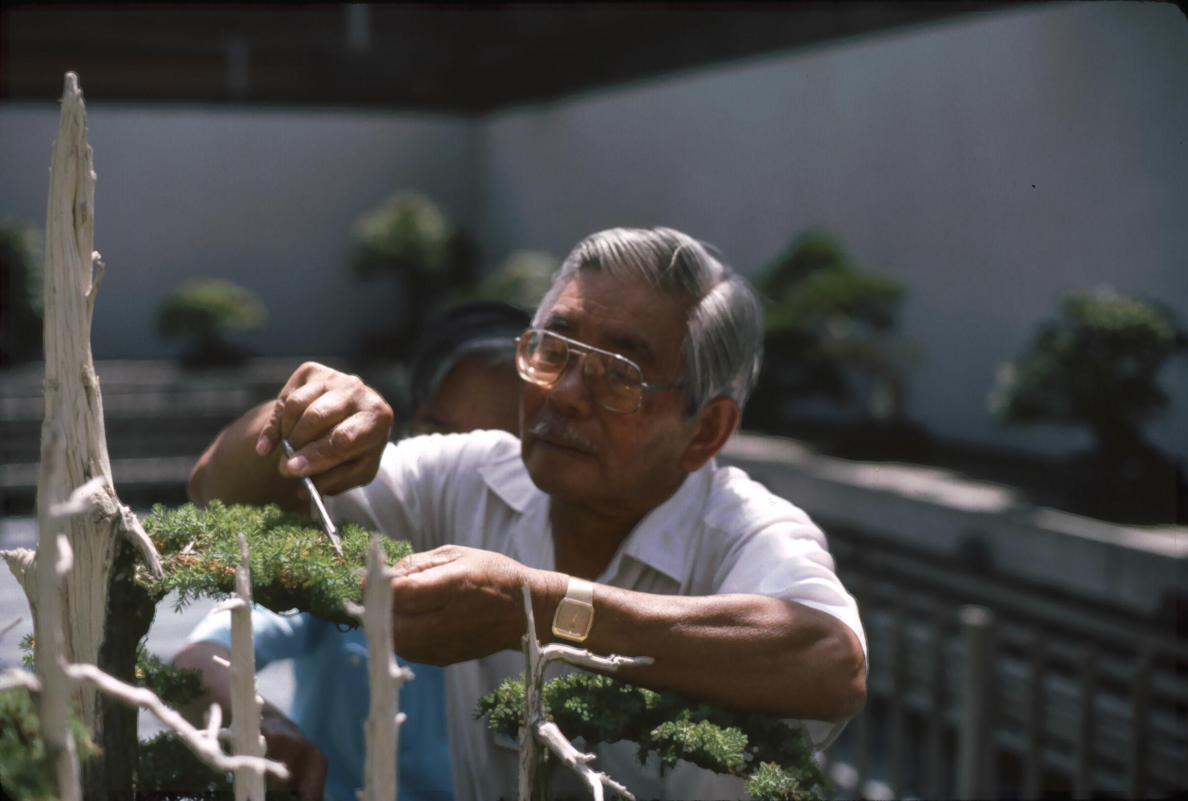 """John Naka pruning """"Goshin"""""""