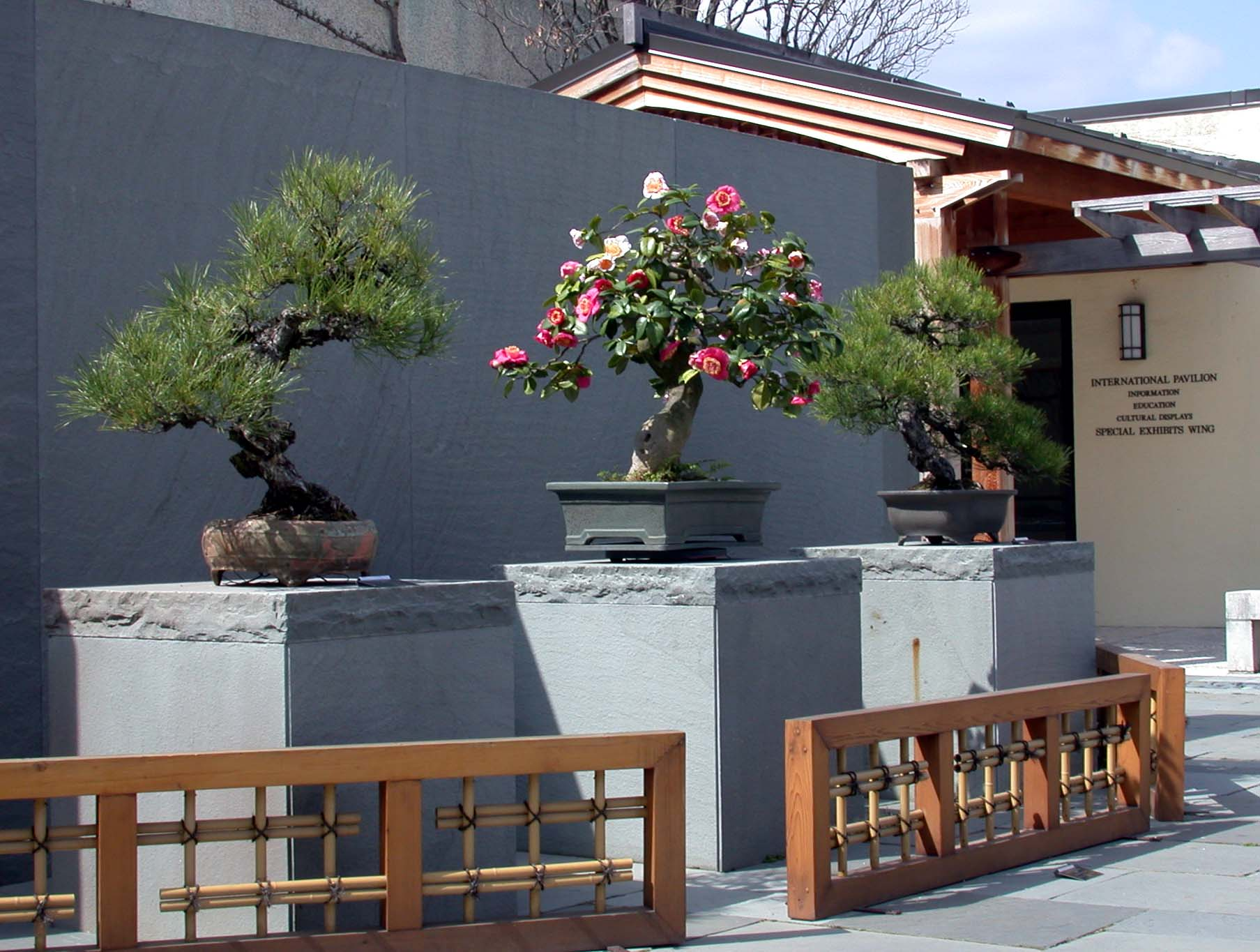 Bonsai from three collections displayed in the upper courtyard