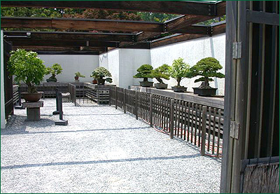 Location Hours National Bonsai Foundation