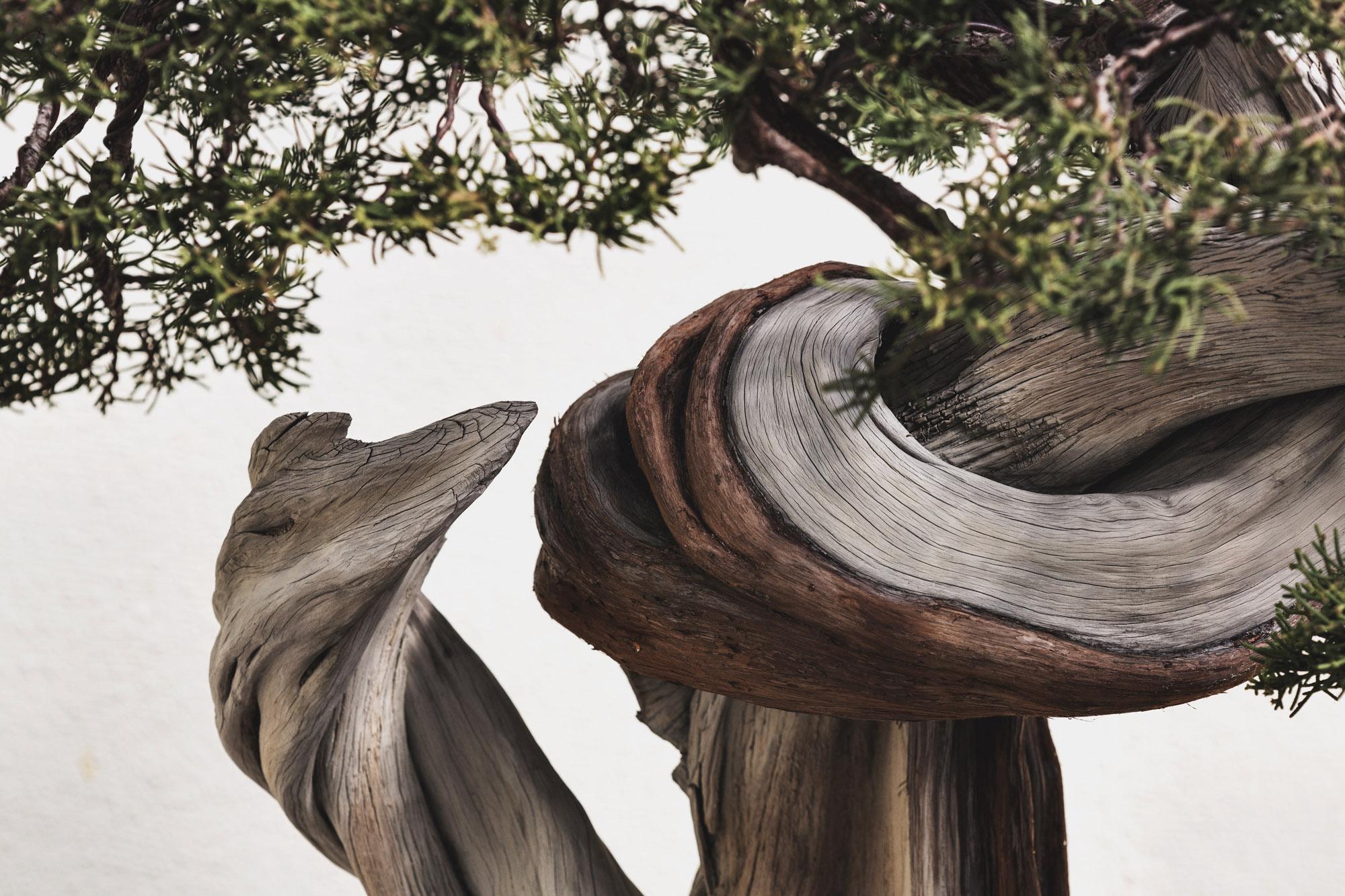voss-bonsai003.jpg