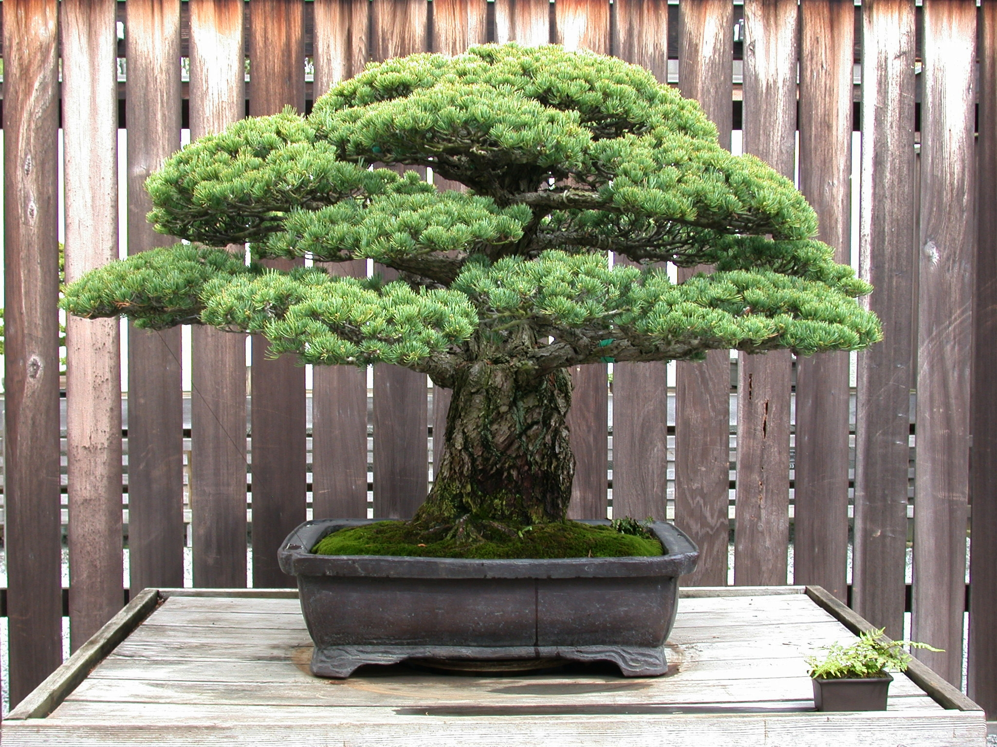 Japanese Collection National Bonsai Foundation