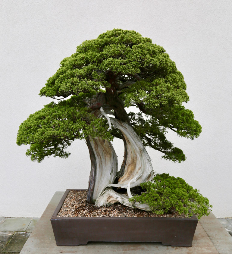 Bonsai Penjing Museum Collections In Dc National Bonsai Foundation