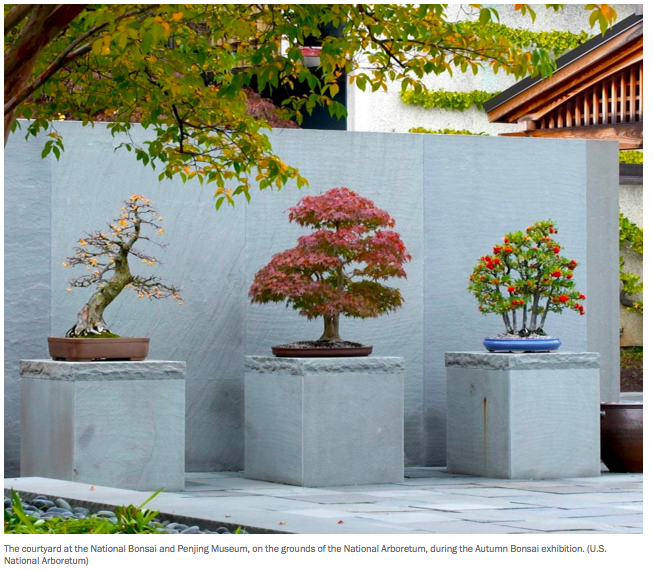 Media Coverage National Bonsai Foundation