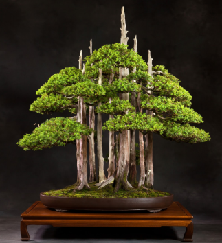 A forest bonsai display.