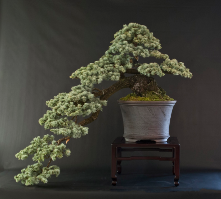 A full-cascade bonsai.