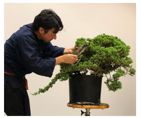 Mori works on bonsai during demonstration.