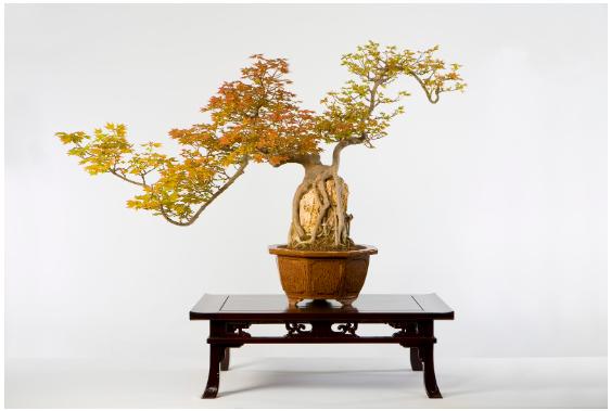 Dragon Penzai at the National Bonsai & Penjing Museum, Stanley Chinn