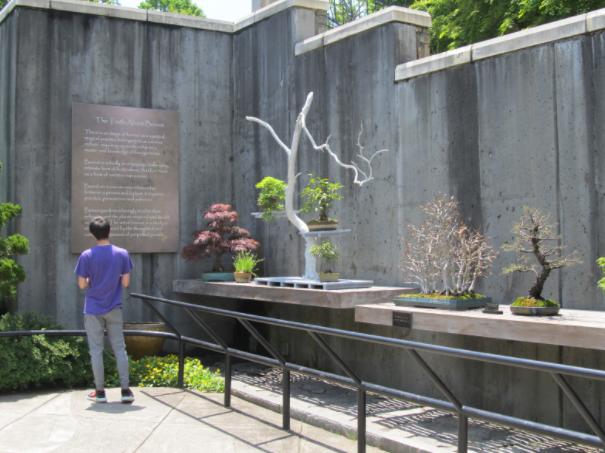 Bonsai Around The World The North Carolina Arboretum Bonsai Exhibition Garden National Bonsai Foundation