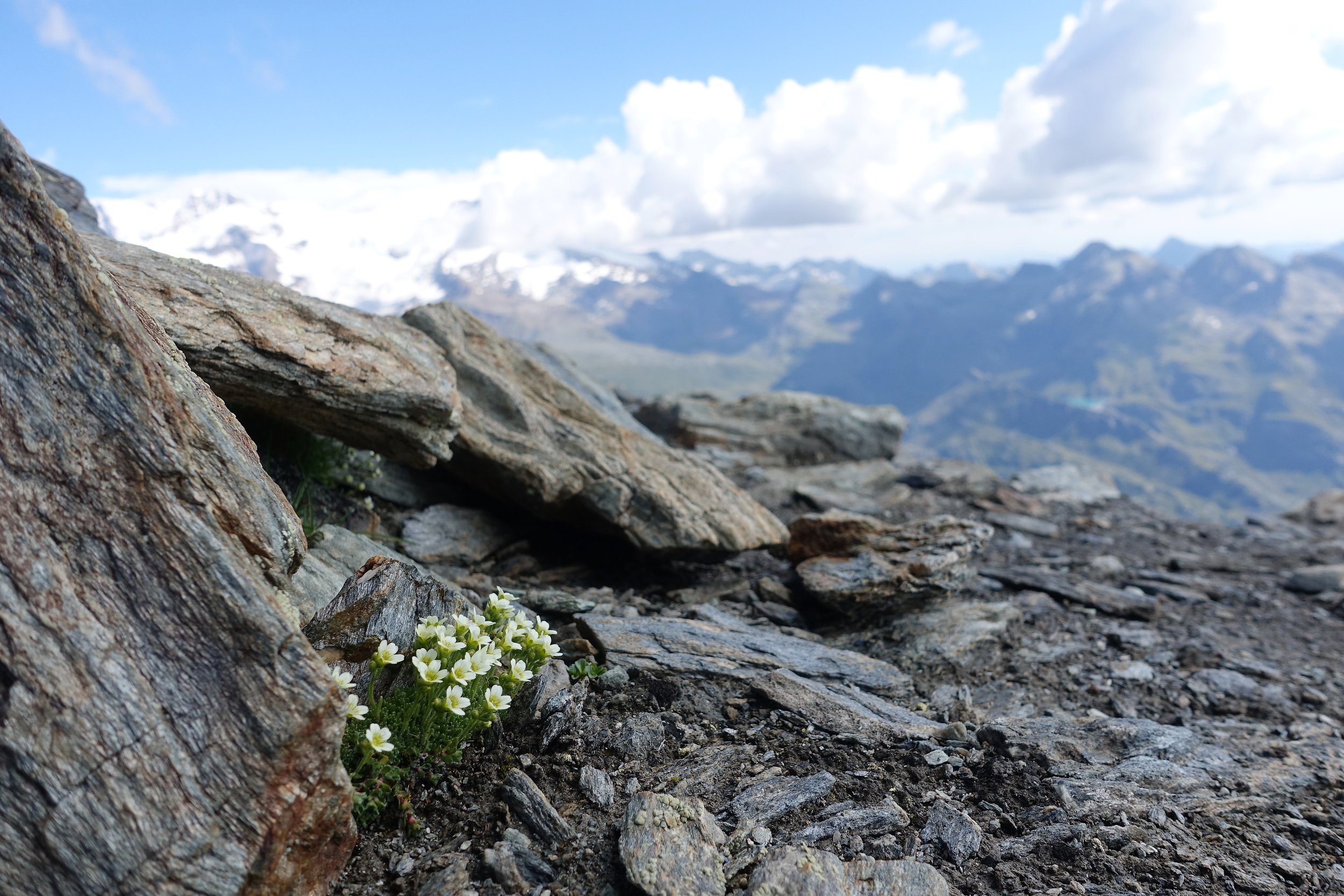 Testa Grigia summit, Valle d'Aosta, Italy (elev. 3300m).
