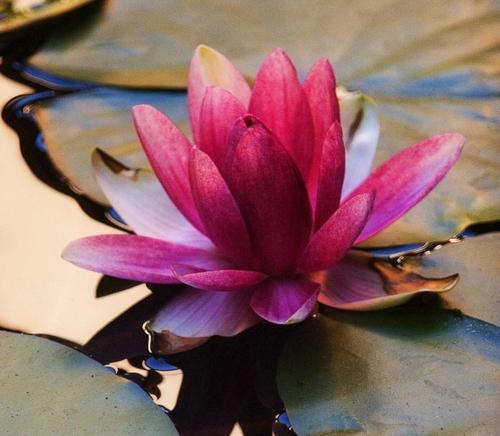 lotusbeauty-1.jpg