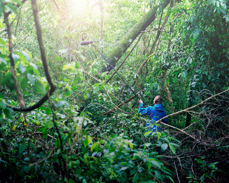 15-SOUNDS-IguazuJungle.jpg