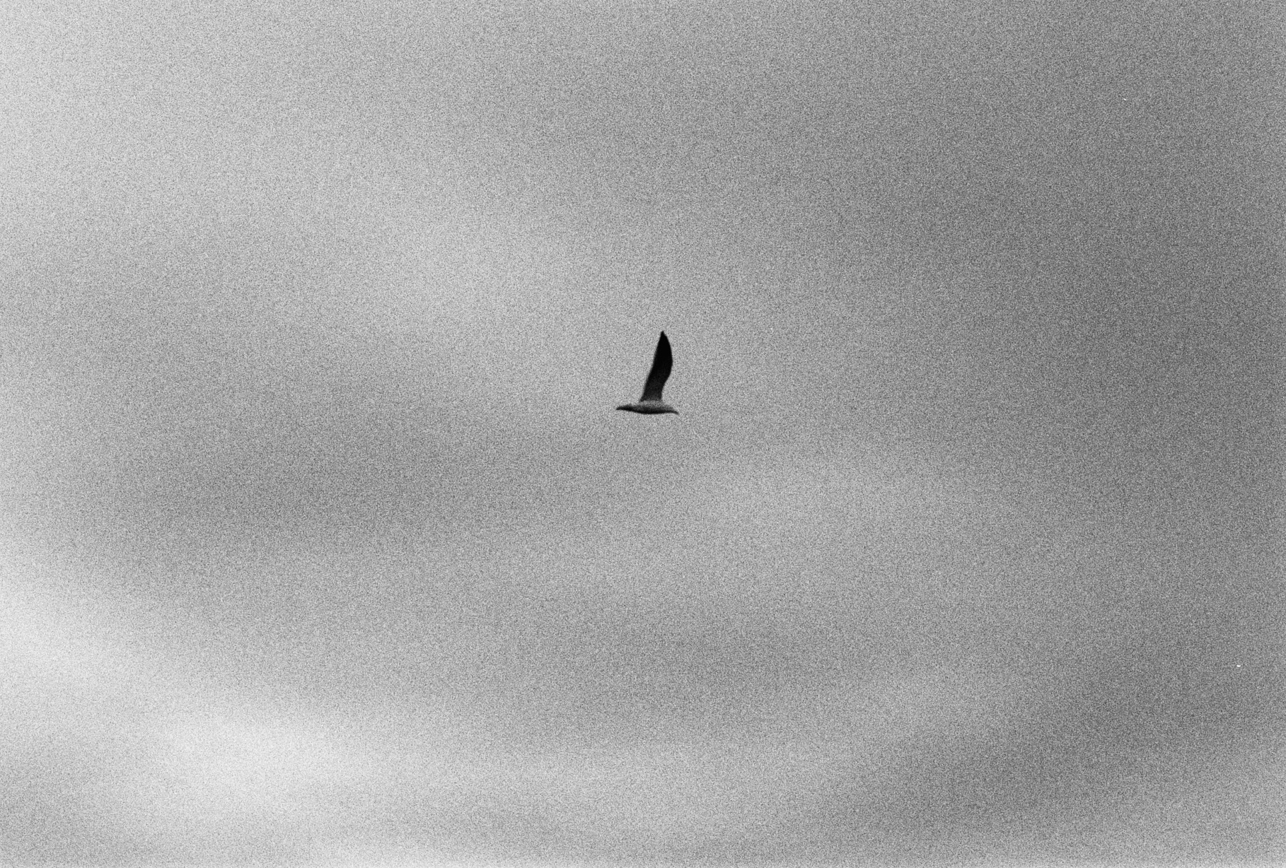 Ian Kenneth Bird