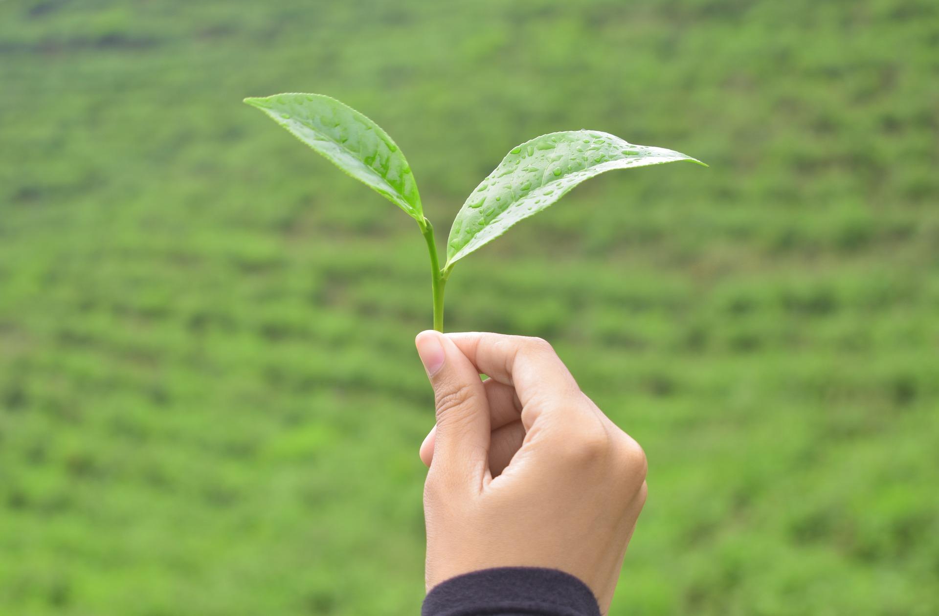 tea-3604881_1920.jpg