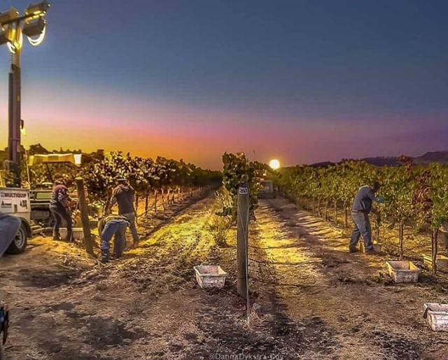 What a great capture by @danna_joy_images ! Happy Wine Month, we're lucky to be surrounded by amazing wineries!   Repost: @cayucosca    #harvest #september #pasowines #805 #california #dogfriendlyslo #vineyard #pasoharvest #winery