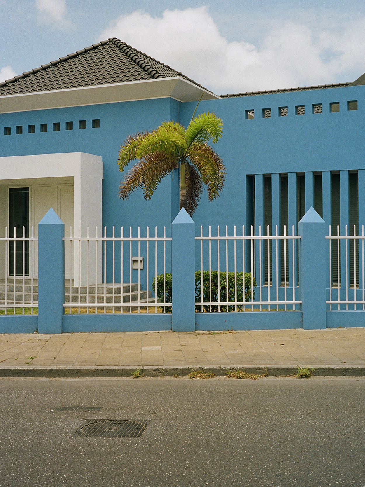 palm-blue copy.JPG