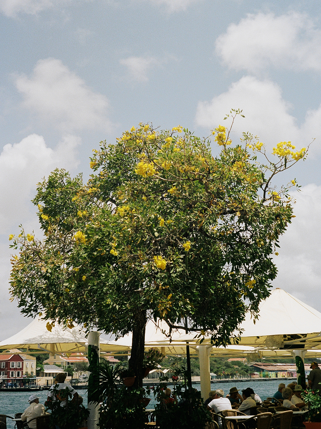 yellow-tree copy.JPG