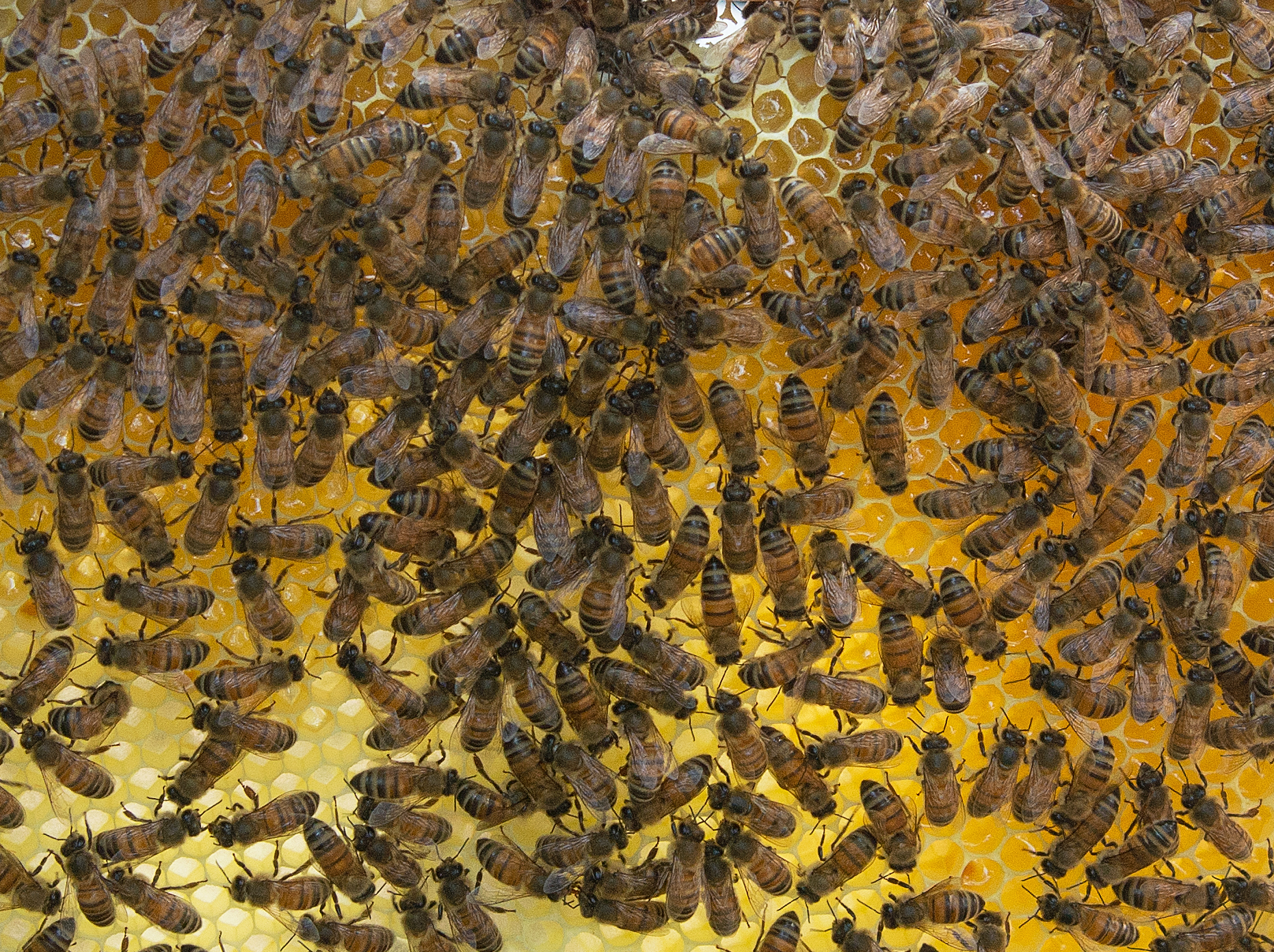 Our hives in France. Image: Nigel Rustin.