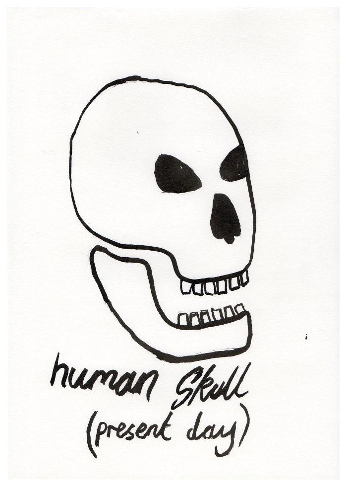 skulls005.jpg