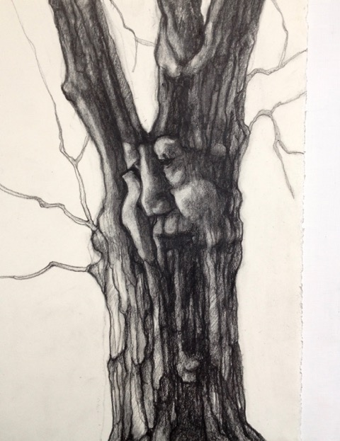TREE SPIRIT I  PENCIL AND CHARCOAL ON PAPER