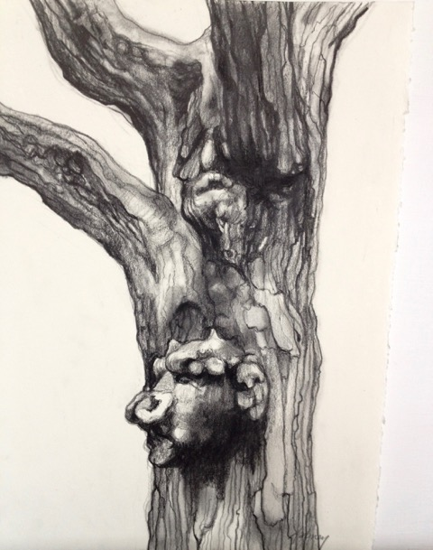TREE SPIRIT II  PENCIL AND CHARCOAL ON PAPER