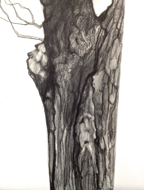 TREE SPIRIT III  PENCIL AND CHARCOAL ON PAPER