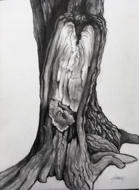 TREE SPIRIT VIII  PENCIL AND CHARCOAL ON PAPER