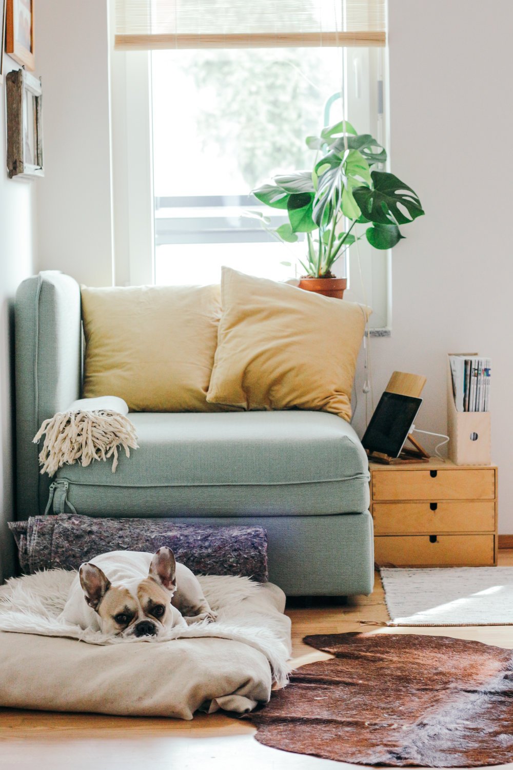 We are the non-toxic cleaning experts. - Our naturally scented products are gentle on you and your family (you too Fido!), but tough on filth, grease and dirt.