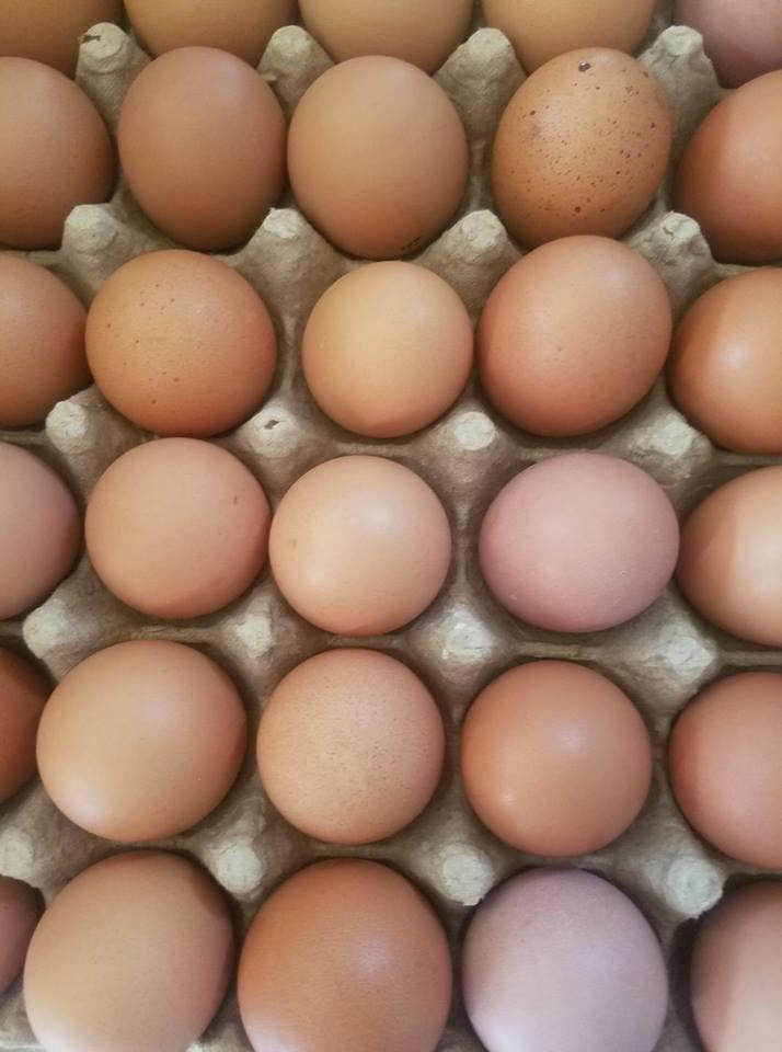 Pin Oak Place Eggs