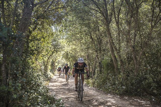 It's Chimpsunday. Ride with your pack down in the woods wherever you are. Mallorca was absolutly treating us well last weekend. . Es Chimpdomingo. Sal con tu grupeta hacia el bosque donde sea que estes. Mallorca nos ha tratado increible este findesemana. . pic by @mr.pinko #gravelgrinder #graveleurope #gravelmallorca #gravelbike #mallorcaevents #mallorca