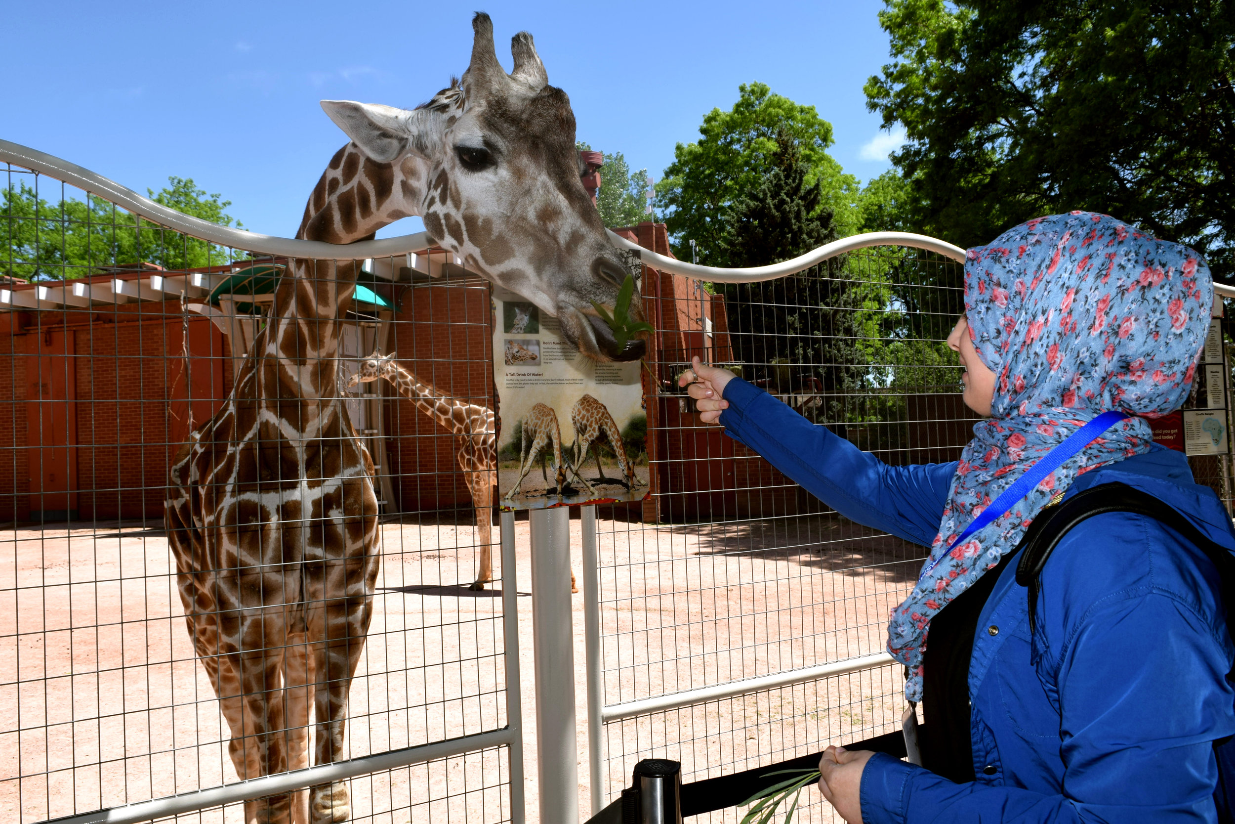 Giraffe at zoo.jpg