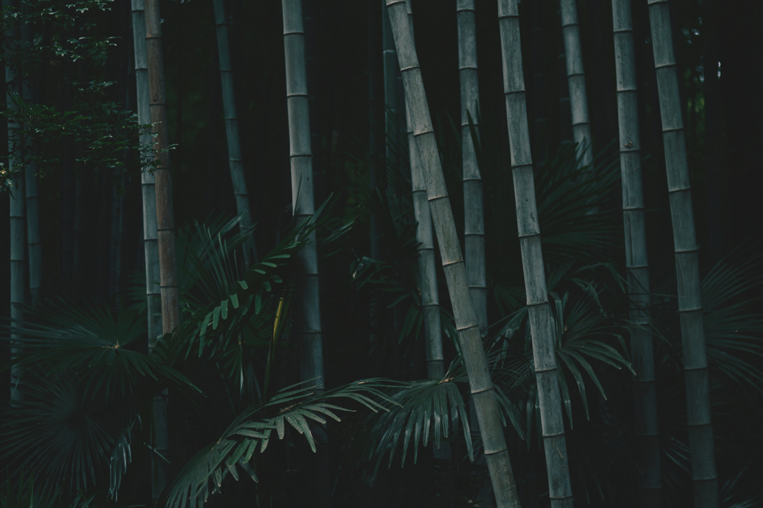 Bamboo forest inspiration