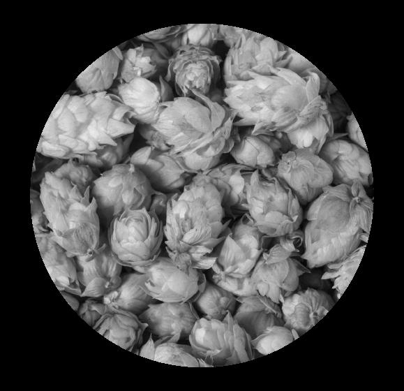 hops_edit_1.1.png