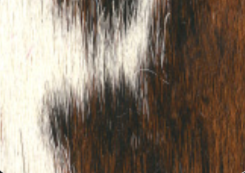 bianco nero marrone