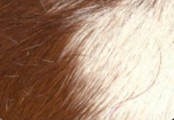 bianco marrone