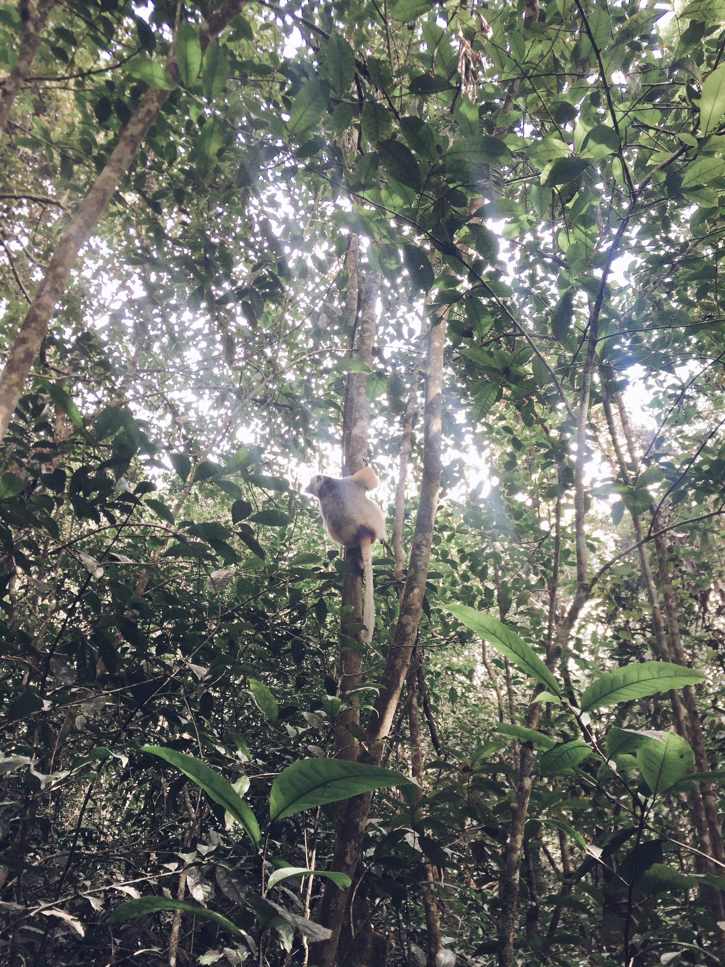 Andasibe - Madagascar (2018) - photo taken by Fanja Ralaimaro