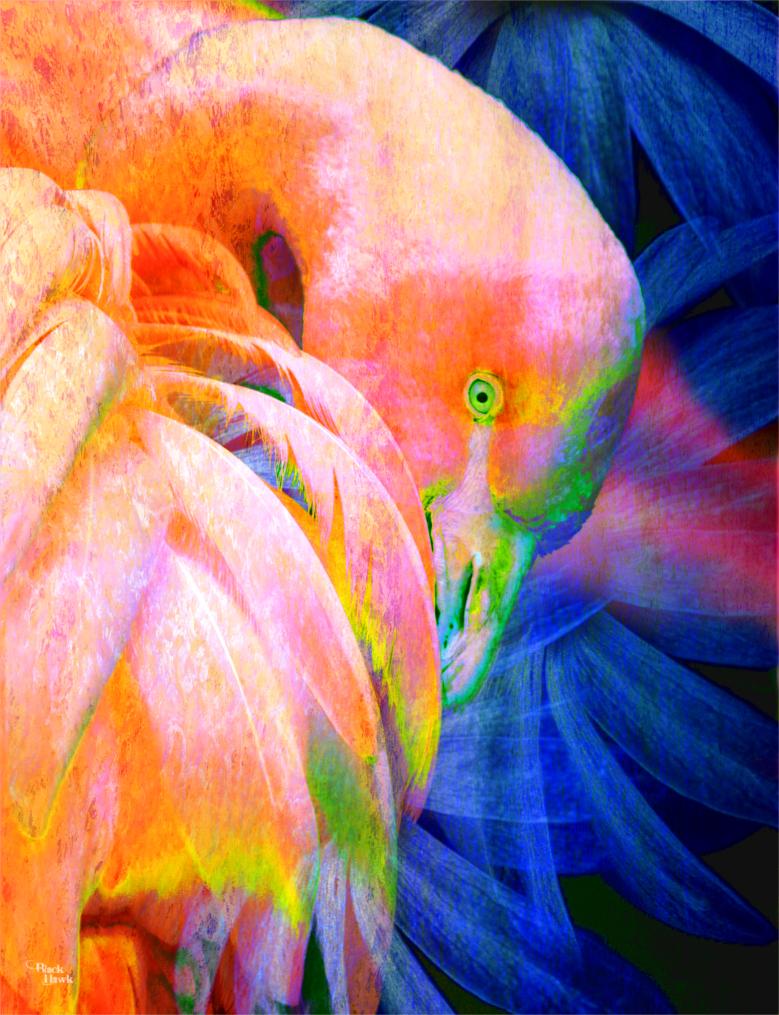 Flamingo .jpg
